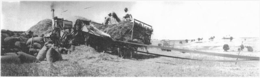 Stacking of oat sheaves and processing of oats at Kyalla Park in 1930s